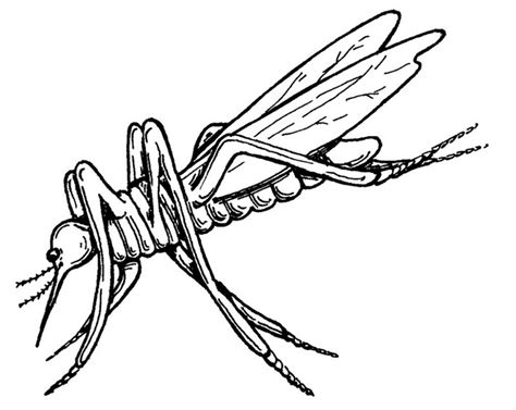 Coloring Pictures For by Free Printable Mosquito Coloring Pages For