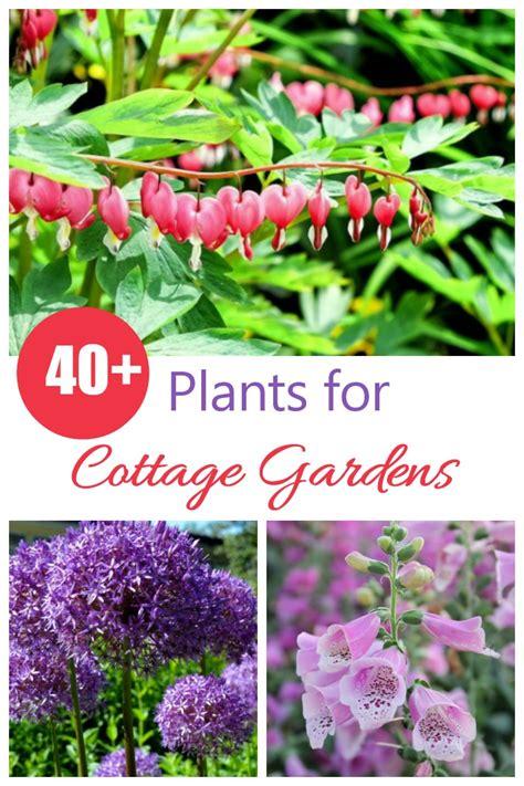 Cottage Garten Pflanzen by Cottage Garden Plants Perennials Annuals Bulbs For