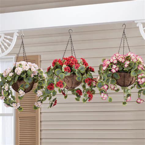 jenis tanaman gantung  mempercantik rumah