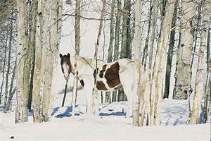 Paint Horse Camouflaged In Snow Photograph by Rich Reid