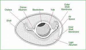 Eggs Diagram