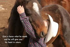 Horses Quotes A Horse Is The Best Friend Ever