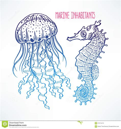 Hand Drawn Seahorse And Jellyfish Stock Vector Image