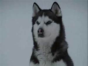 You Are Not Alone-Eight Below Clips - YouTube