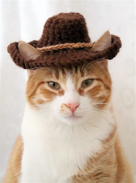 #cowboy #cowboy cat #hat #edit #beautiful cats #catsofig #cat #cat memes #catlover #he's my baby #my cinnamon apple #and ain't never gonna i found a tiny cowboy hat on sale at walmart for 49 cents. Fall Hat Month: Celebrate With An Eye-Catching Cat Hat ...