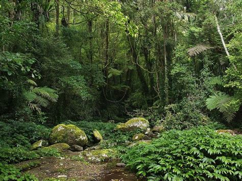 What Is A Rainforest? Importance, Layers, And Types Of