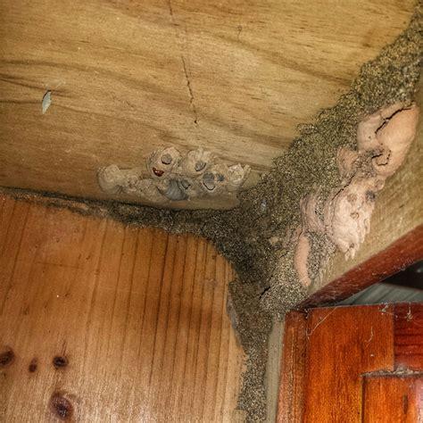 identifying termite  wasp mudding  termite