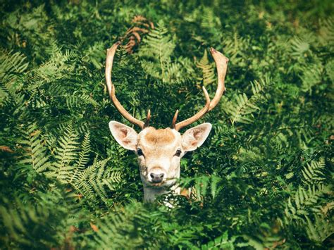 deer zombie disease humans wasting fear spread could