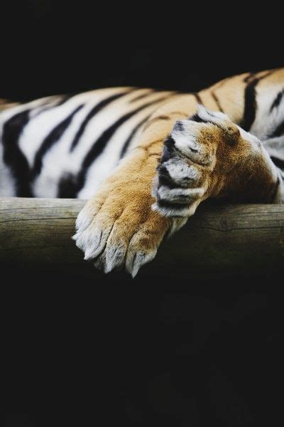 Best Claws Paws Hands Feet Images Pinterest