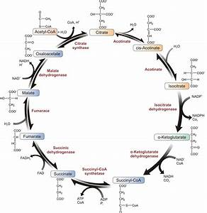 Energy Metabolism I