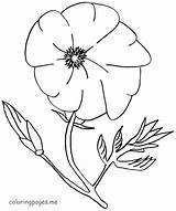 Poppy Coloring Pages Flowers Template Drawing Sheets Blank Getdrawings Popular sketch template
