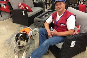 lowes hires man and his service dog pro pet hero blog With lowes hires service dog