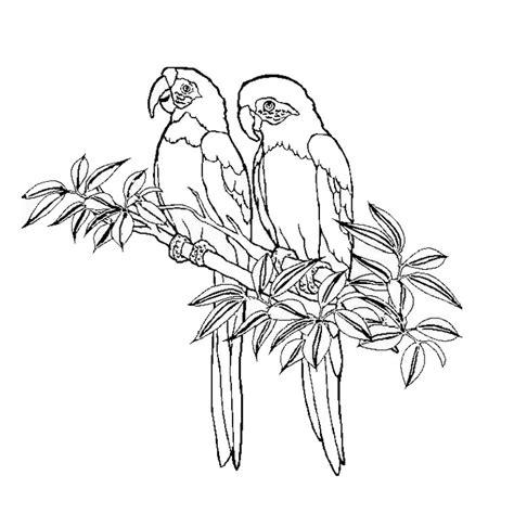 dessins de coloriage oiseau lyre  imprimer