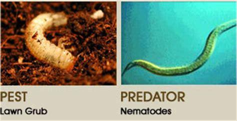Nematode In Home Garden nematodes cultivate garden gift