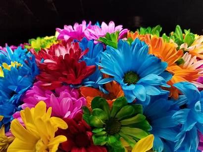 Colorful Flowers Flower Domain Rainbow Ad Jooinn