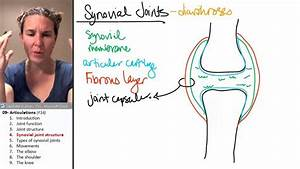 Articulations 4- Synovial Joint Anatomy