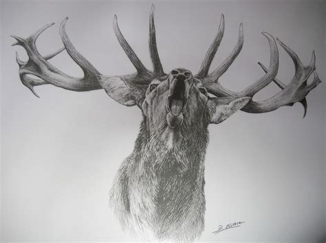 male red deer  danielolivera  deviantart