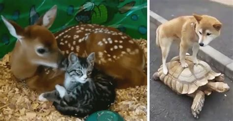 22 Unusual Animal Friendship GIFS That Are Way Too Cute