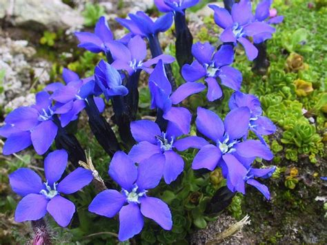plants of mountains image gallery mountain plants