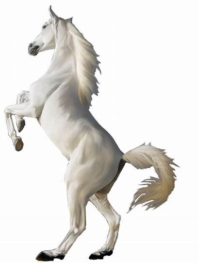 Horse Clipart Jumping Transparent Animal Psd Transprent