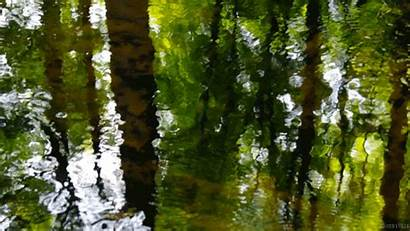 Nature Living Water Forest Stills Cinemagraph Animated