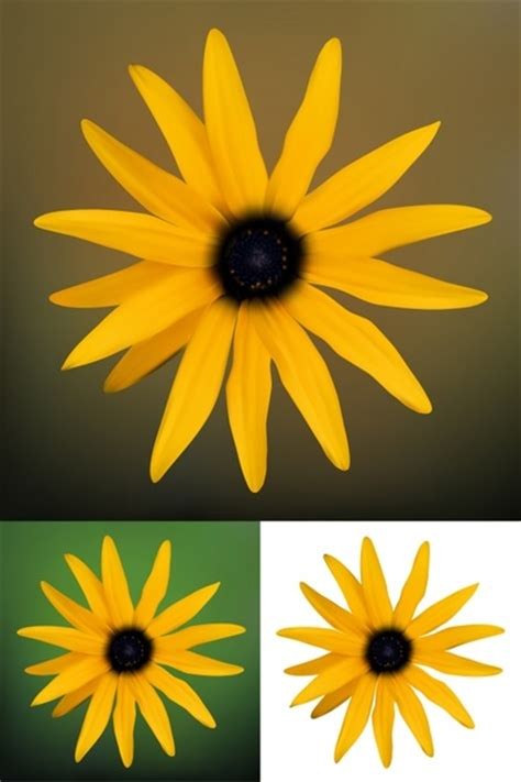 daisy  vector    vector