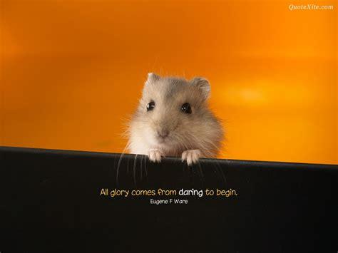 positive quotes  animals cute quotesgram