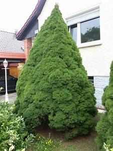 Weihnachtsbaum Wasser Geben : top 28 weihnachtsbaum pflanzen best 28 weihnachtsbaum wasser geben prima tannen 52 besten ~ Bigdaddyawards.com Haus und Dekorationen