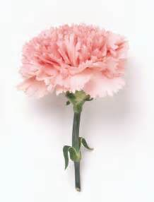 carnation bouquet carnations tranquility floral