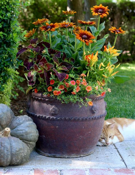 These Warm Colors Combine Well For A Container Any Time Of