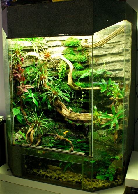 chinese water dragon images  pinterest reptile