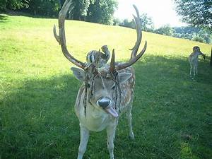 Musings Of A Biologist And Dog Lover  Is It A Horn Or An Antler