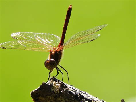 A List Of Different Types Of Flying Insects With Pictures