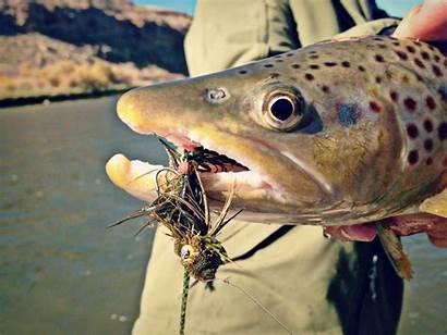 Streamer Fishing River Switch Streamers Rivers Gunnison