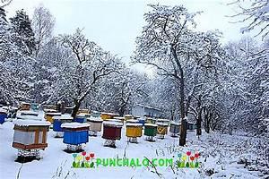 Wie überwintern Bienen : wie viel honig die bienen f r den winter verlassen ~ A.2002-acura-tl-radio.info Haus und Dekorationen