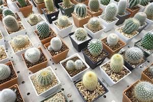 Mini Succulente Pas Cher : prix cactus crit res co t ooreka ~ Teatrodelosmanantiales.com Idées de Décoration