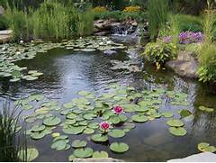 Water Garden Aquarium And Water Garden Enthusiasts NY Invasive Species Awareness