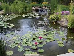 Water Garden Aquarium And Water Garden Enthusiasts NY Invasive Species Awareness
