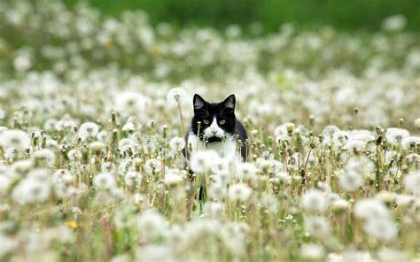 black white beautiful   life  cats