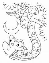 Coloring Snake Boa Constrictor Reticulated Pdf sketch template