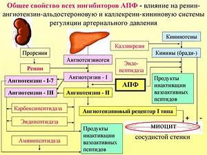 Народные средства от повышенного артериального давления при беременности
