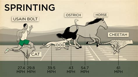 human horse speed animals compared endurance race outrun sprint health shots