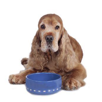 Welpen Hundefutter Test