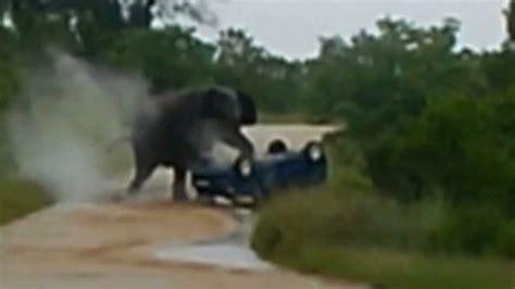 elephant rolls car elephant attack caught  camera youtube