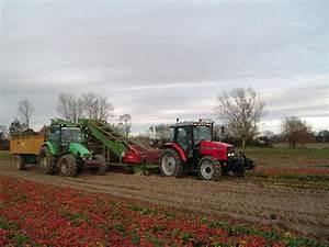 Plant De Fraisier : plant frigo de fraisier longu jumelles ~ Premium-room.com Idées de Décoration