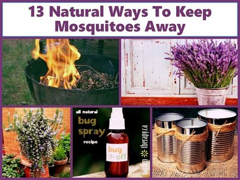 How To Keep Flies Away From Backyard by 1000 Ideas About Mosquito Repellant On