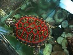 1000 images about owen mzee on pinterest turtle