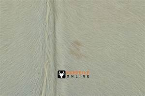 Kuhfell Teppich Weiß : kuhfell teppich natur weiss 190 x 200 cm bei kuhfelle online kaufen ~ Frokenaadalensverden.com Haus und Dekorationen