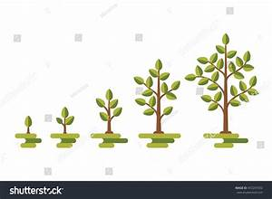 Green Tree Leaf Growth Diagram Business Stock Vector 472247032
