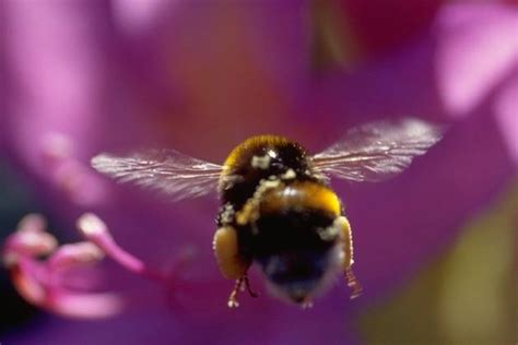 The Right Attitude & Mindset Is A Must Be Like The Bee